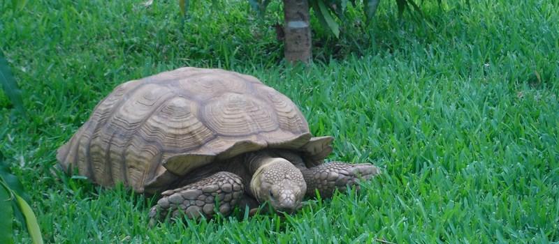 La tortue symbolise bien ce qu'est le yukkuri