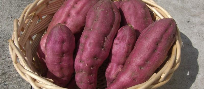 satsumaimo-patate-douce-japonaise