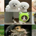 Dôbutsu (動物) : les animaux, ces «choses qui bougent»