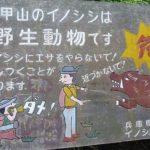 Inoshishi (猪) : le sanglier, une bête qui fait «ui !»